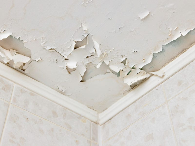 How To Fix Peeling Paint On A Ceiling In 4 Steps Tribble Painting