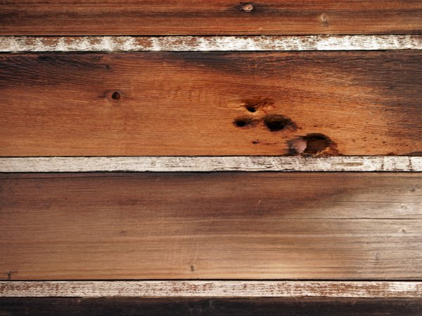 Woodpecker holes that need repairing