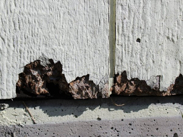 louisiana pacific siding issues include rotting